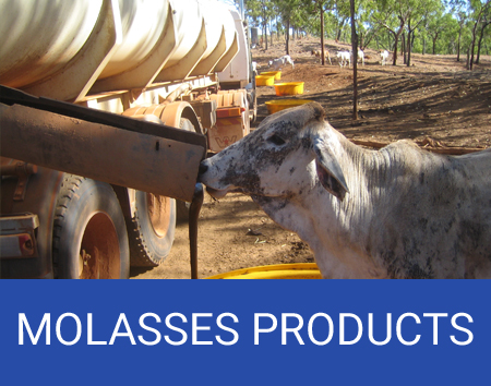 molasses products queensland