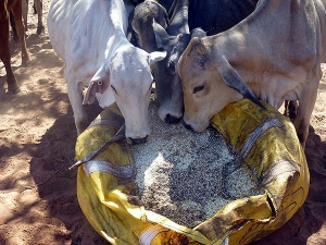 cattle feed qld