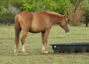 stocklick horse mixes
